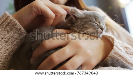 Close up of a cute sleeping kitty-cat in the woman's hands. Woman stroking her lovely little pet. Indoor - Shutterstock ID 767349043