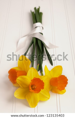Close up of a Daffodil Bouquet wrapped in ribbon on White Wood Background for a spring season party or occasion with Copyspace.