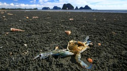 Close-up of a dead crab at a beach