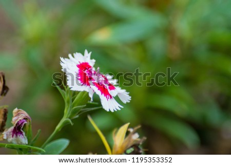 Close up of a flower blooming in the grass next to withering flowers #1195353352
