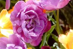 Close up of a flower in Washington Park, Albany NY