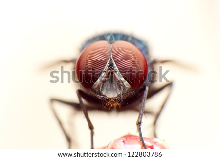 close up of a fly #122803786