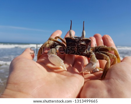 close-up of a funny crab with eyes sitting on a hand against the background of the sea. tourism concept Stock foto ©