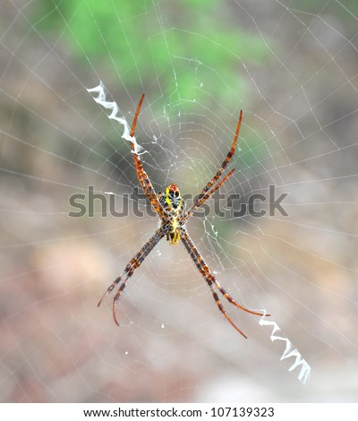 Close up of a golden orb spider on web