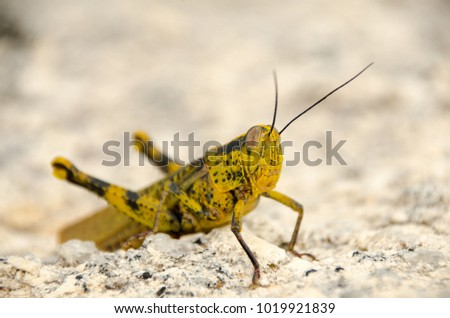 Close up of a grasshopper sitting on a rock #1019921839
