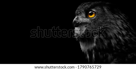Close-up of a Great Spotted Owl on a black background. Detail bubo bubo. Owl on the black background. Foto d'archivio ©