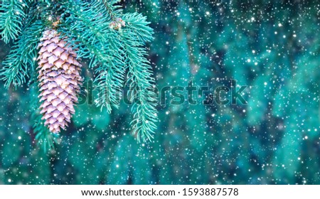 Close up of a green fir tree branch branch with cones.