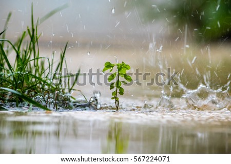 Close up of a green plant while it is raining.