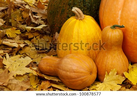 Close up of a group of pumpkins of different shapes and sizes surrounded by leaves