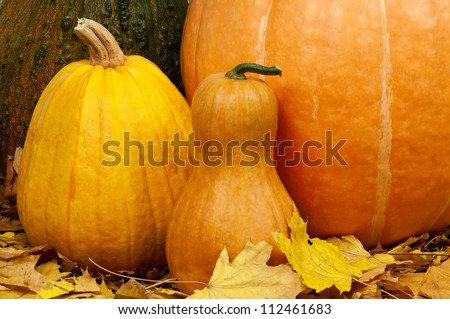 Close up of a group of pumpkins of different shapes and sizes surrounded by leaves - stock photo
