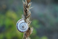 Close-up of a grove snail