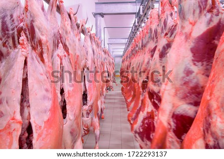 Close up of a half cow chunks fresh hung and arranged in a row in a large fridge in the fridge meat industry. Halal cutting. Сток-фото ©