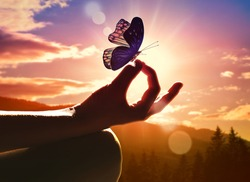 Close up of a hand in a meditation pose and butterfly. Sunset in the mountains.