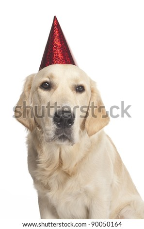 close-up of a  Happy New's year golden retriever