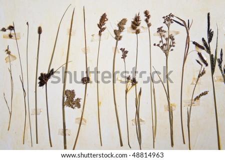 close up of a herbarium