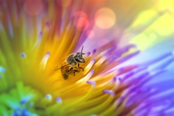 close-up of a Honey bee collecting pollen from a yellow flower