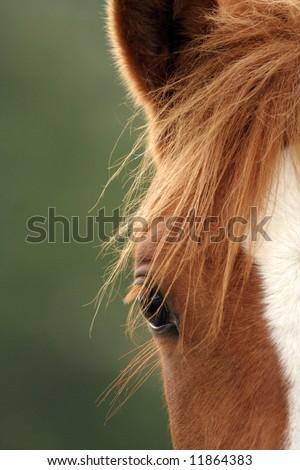 Close up of a horse