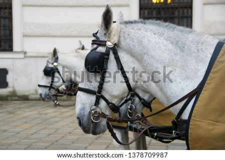 Close up of a horse-driven carriage, a famous tourist attraction, at Hofburg palace, Vienna, Austria