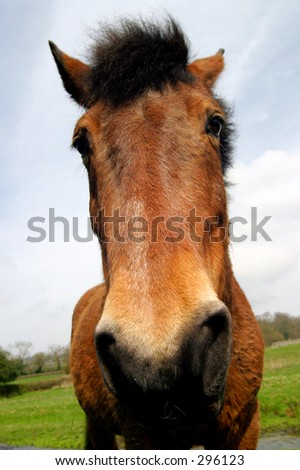 Close up of a horse face - stock photo