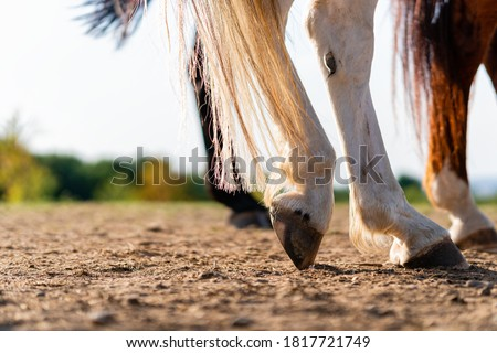 Close-up of a horse's hind legs and hooves in resting position on a horse pasture (paddock) at sunset. Typical leg position for horses. Concepts of rest, relaxation and well-being. Copy space. Foto stock ©