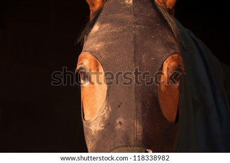 Close up of a horse wearing a hood