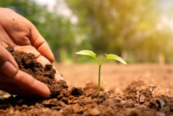 Close-up of a human hand holding a seedling, including planting the seedlings, the concept of Earth Day, and the global warming reduction campaign.