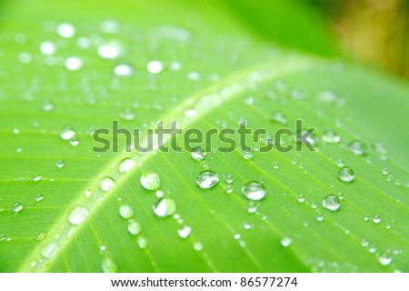 Close-up of a leaf and water drops on it