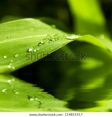 Close-up of a leaf and water drops on it background with reflection in water