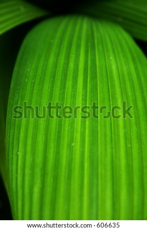 Plants with Parallel Veined Leaves http://www.shutterstock.com/pic-606635/stock-photo-close-up-of-a-leaf-with-parallel-veins.html