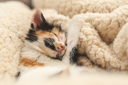 close up of a little kitten sleeping in warm bed