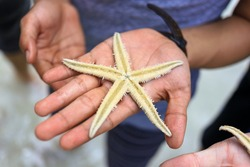Close up of a live starfish on a palm of hand of Asian man at a beach in Pari Island, Indonesia.