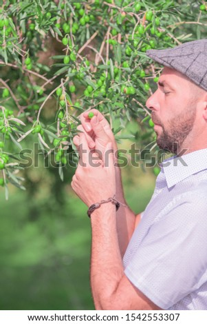 Close-up of a man with a beard and a grey cap, he looks closely at some small green olive on the branches of a tree. Concept of a day of relaxation.