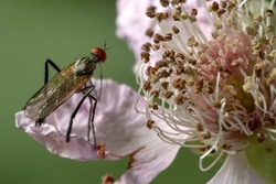 close up of a march fly on a flower