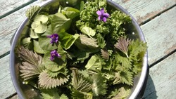 Close up of a metal  colander bowl of nutritious foraged edible organic flowers and plants from the home garden  of nettles, violets, spinach on a vintage wooden table in the sunshine in Summer