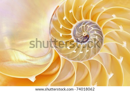 Close-up of a nautilus shell revealing its intricate patterns, textures, and details