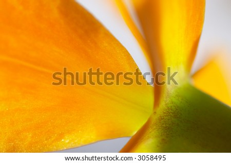 Close-up of a orange orchid