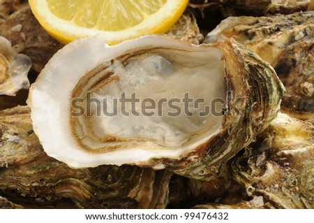 close up of a oysters and lemon