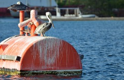 Close up of a pair of adult brown American pelicans perched on a bright orange ship mooring barrel floating in rippling blue Caribbean sea water. Room for text and copy space.