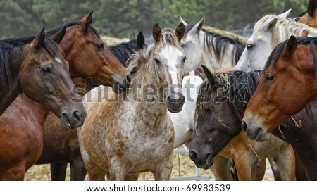 Close-up of a penned herd of untamed horses in the modern American west (shallow depth of field, center focus point, wide format).