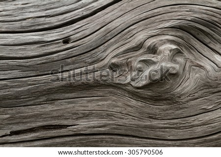 close up of a piece of drift wood in the California coast to be used as a background or texture #305790506