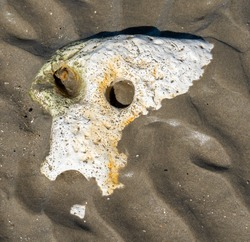 Close up of a piece of sedimentary limestone chalk rock that has been eroded and shaped into a white sculpture of a skull with two eye sockets; a skeleton partially buried in the sand.