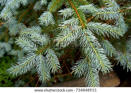 Close Up of a Pine Tree Branch at a Christmas Tree Farm #734848915