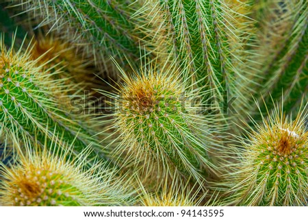 Close-up of a prickly cactus