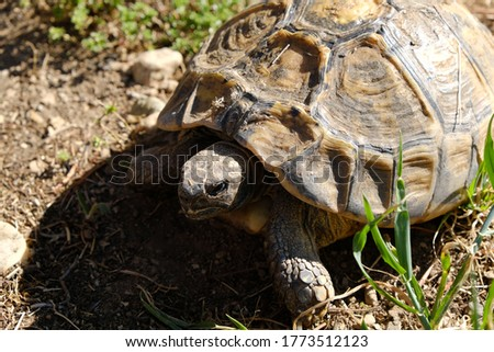 Close up of a rare turtle