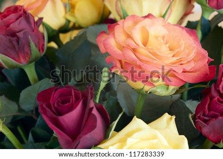 Close up of a rose flowers