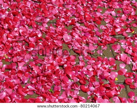Close Up Of A Rose Petals Forming A Flower Carpet Ez Canvas