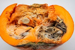 Close-up of a rotten pumpkin cut in half on a white background