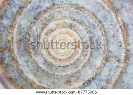 Close up of a sea snail as background