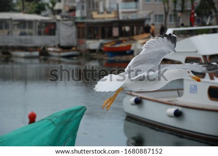 Close up of a seagull flying in the harbour