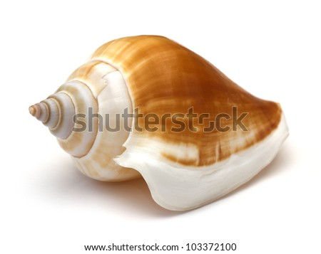 close up of a seashell on white background